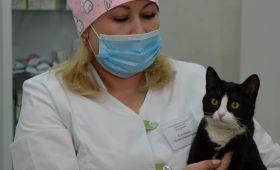 Клиника Самарского ГАУ -  одна из лучших площадок практической подготовки ветеринарных врачей и фельдшеров встране